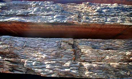 Live edge texture of the Bubinga slabs